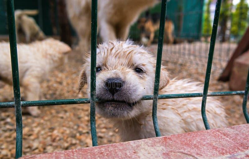Cachorrinho em uma gaiola imagem de stock royalty free