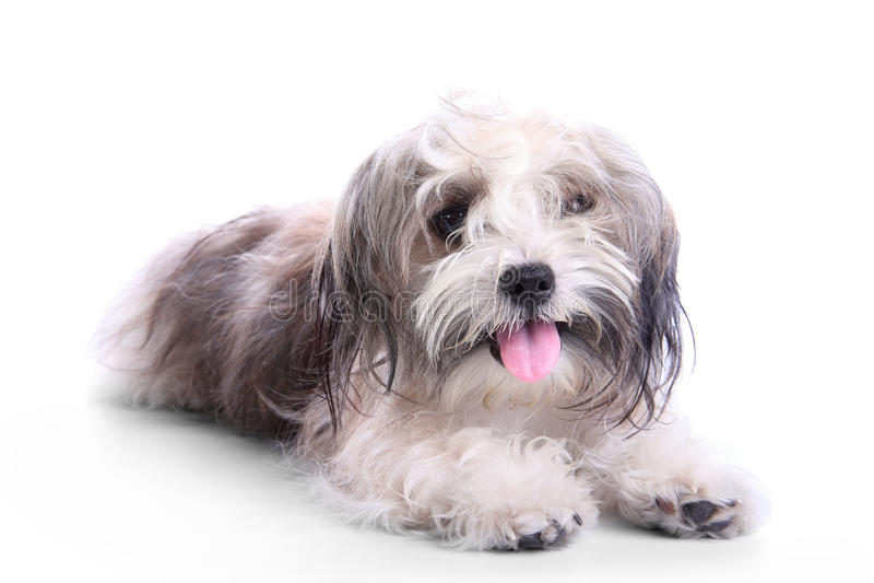 Cachorrinho feliz sujo fotos de stock