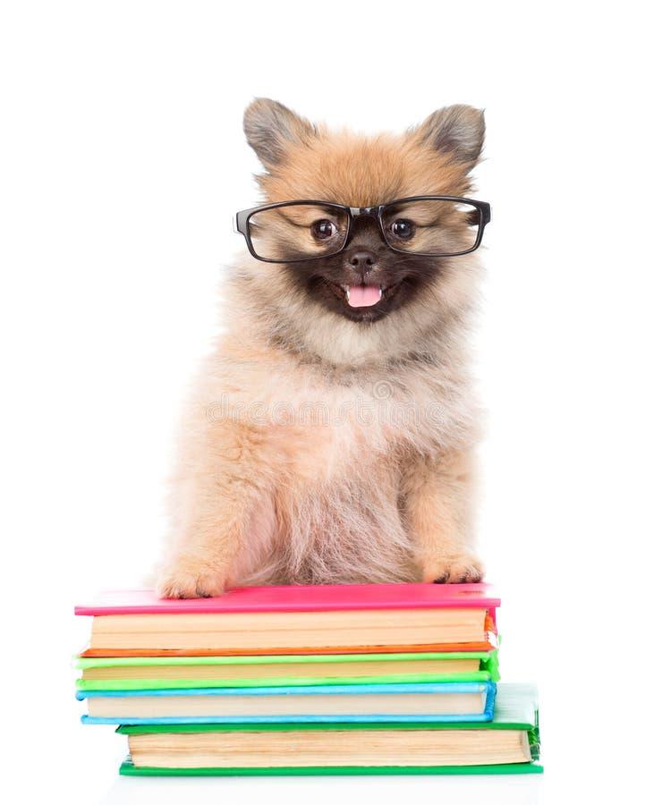 Cachorrinho minúsculo do spitz com os vidros que estão no livros Isolado foto de stock royalty free