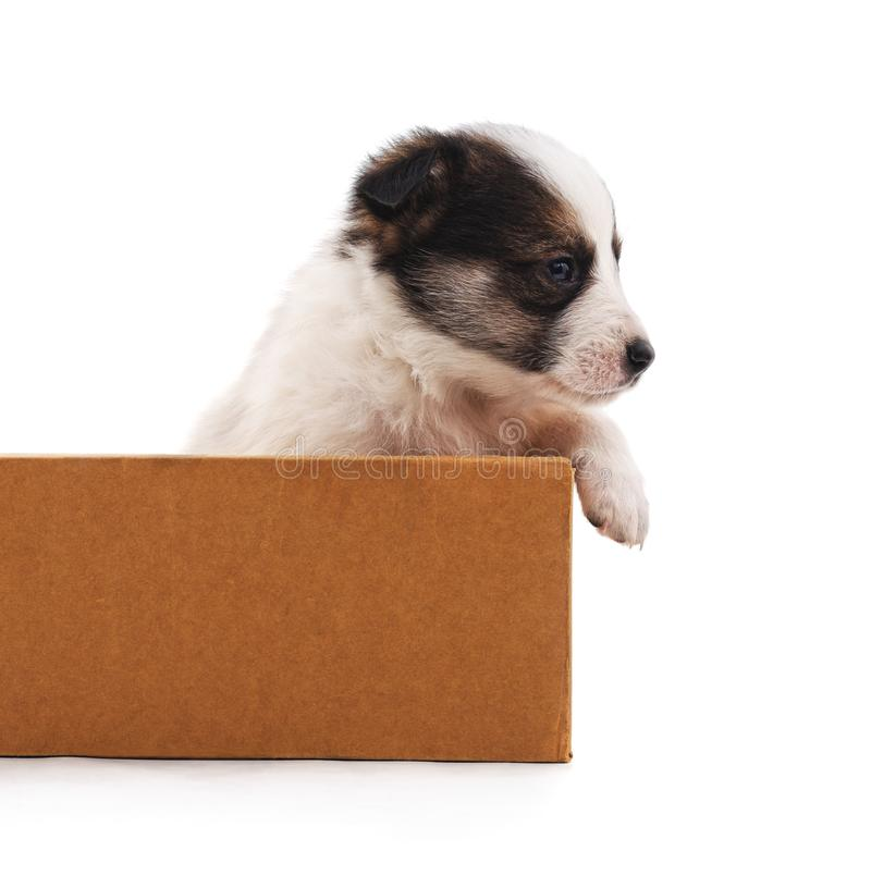 Cachorrinho na caixa imagens de stock