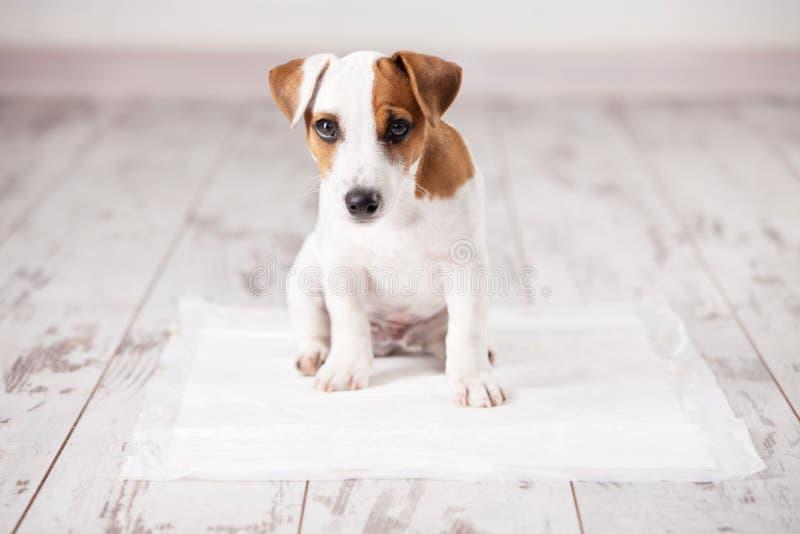 Cachorrinho na maca absorvente imagem de stock royalty free