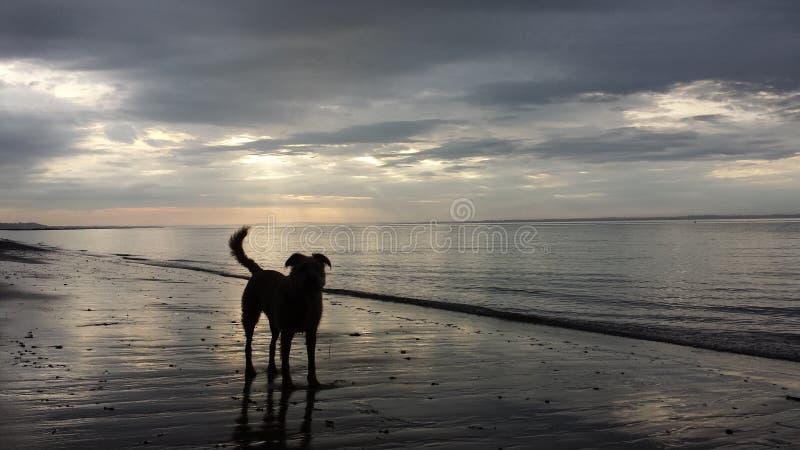 Cachorrinho no por do sol da praia imagens de stock royalty free