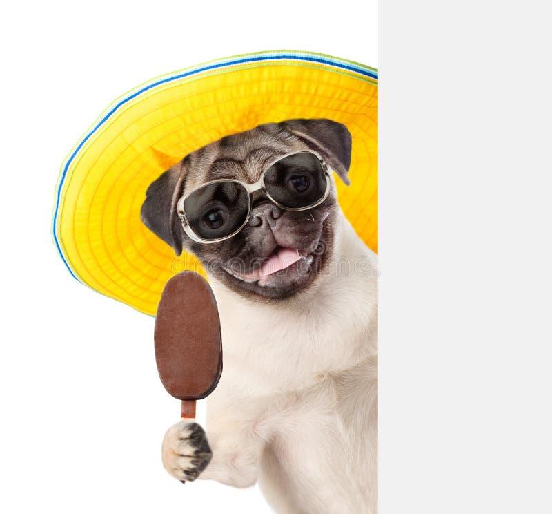 Cachorrinho nos óculos de sol que guardam o picolé e que espreitam da placa vazia de trás Isolado no fundo branco imagem de stock royalty free