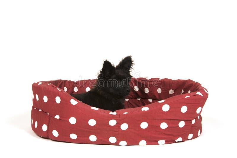 Cachorrinho pequeno no fundo branco imagens de stock royalty free
