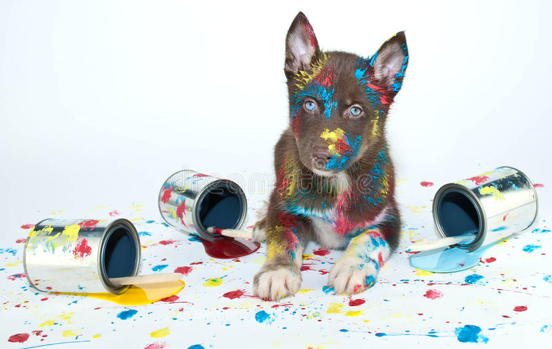 Cachorrinho pintado fotos de stock
