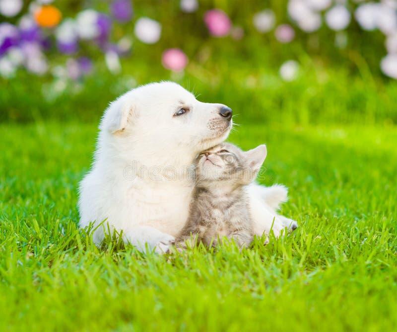 Cachorrinho suíço branco do ` s do pastor que encontra-se com o gatinho na grama verde fotografia de stock royalty free