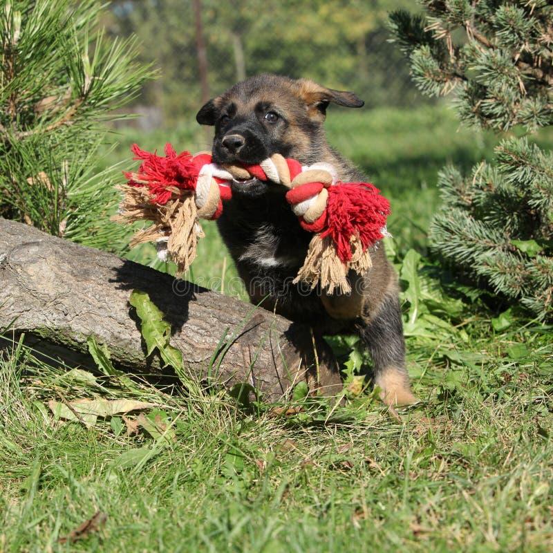 Cachorrinho surpreendente do pastor alemão que salta com um brinquedo fotografia de stock