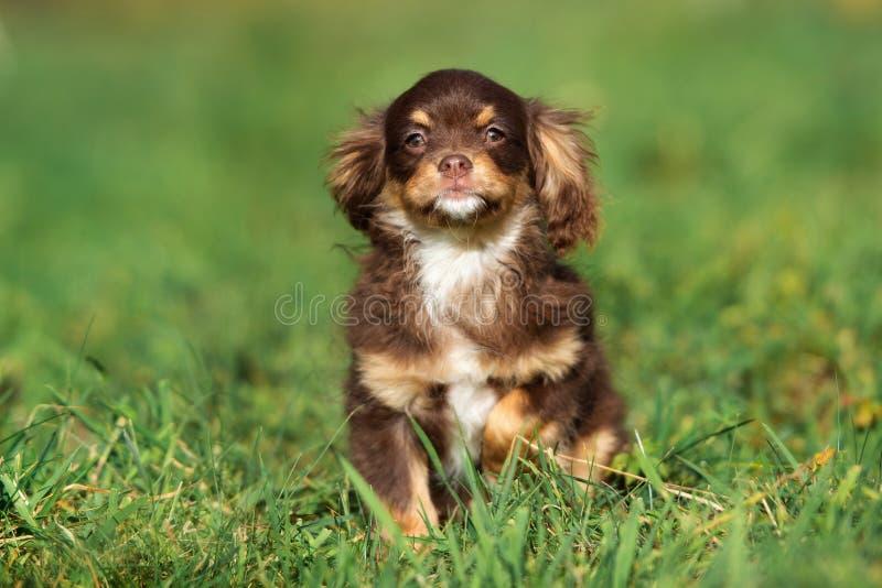 Cachorrinho tricolor adorável que levanta na grama imagens de stock