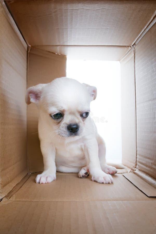 Cachorrinho triste na caixa de cartão fotografia de stock royalty free