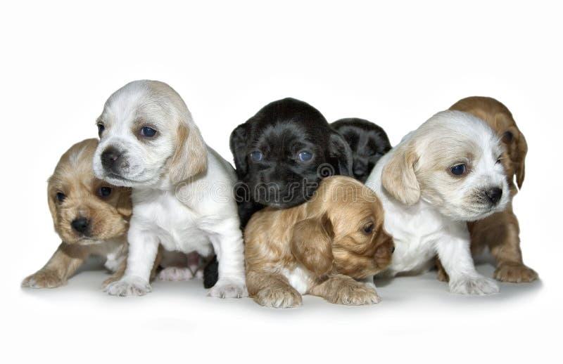 Cachorrinhos fotografia de stock