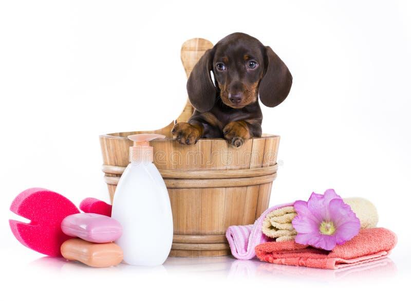 Cachorrinhos de lavagem em uma cuba, preparando imagem de stock