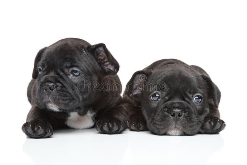 Cachorrinhos do buldogue francês imagem de stock royalty free