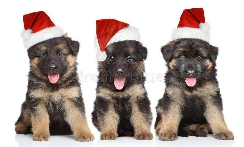 Cachorrinhos do pastor alemão no chapéu vermelho de Santa fotos de stock royalty free