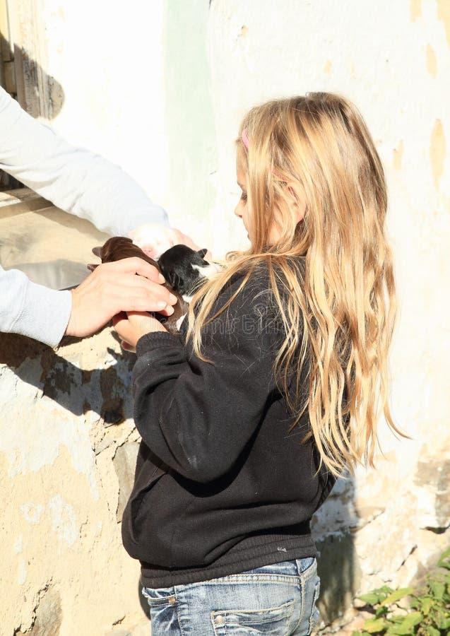 Cachorrinhos holded nas mãos das crianças foto de stock