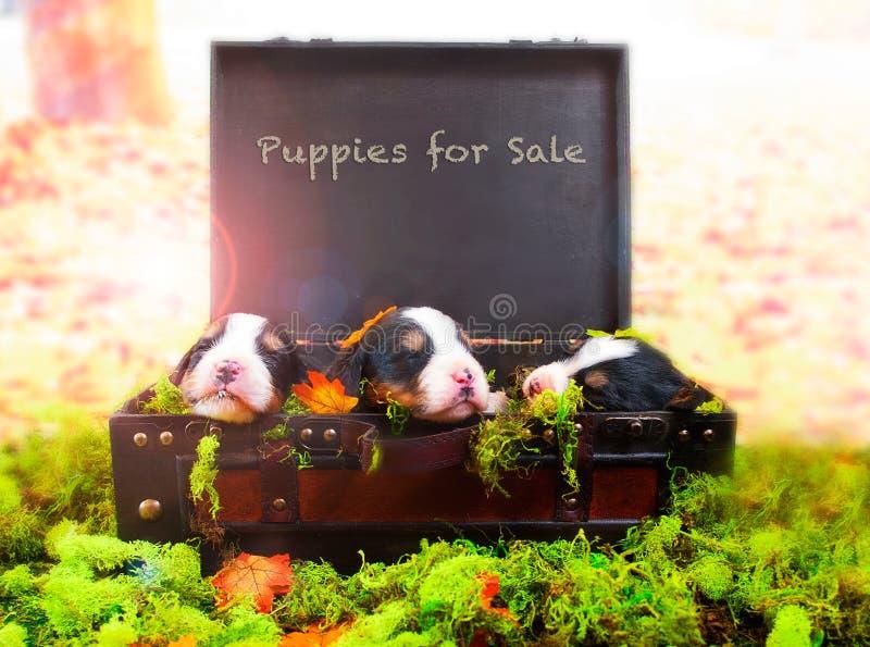 Cachorrinhos para a venda imagens de stock