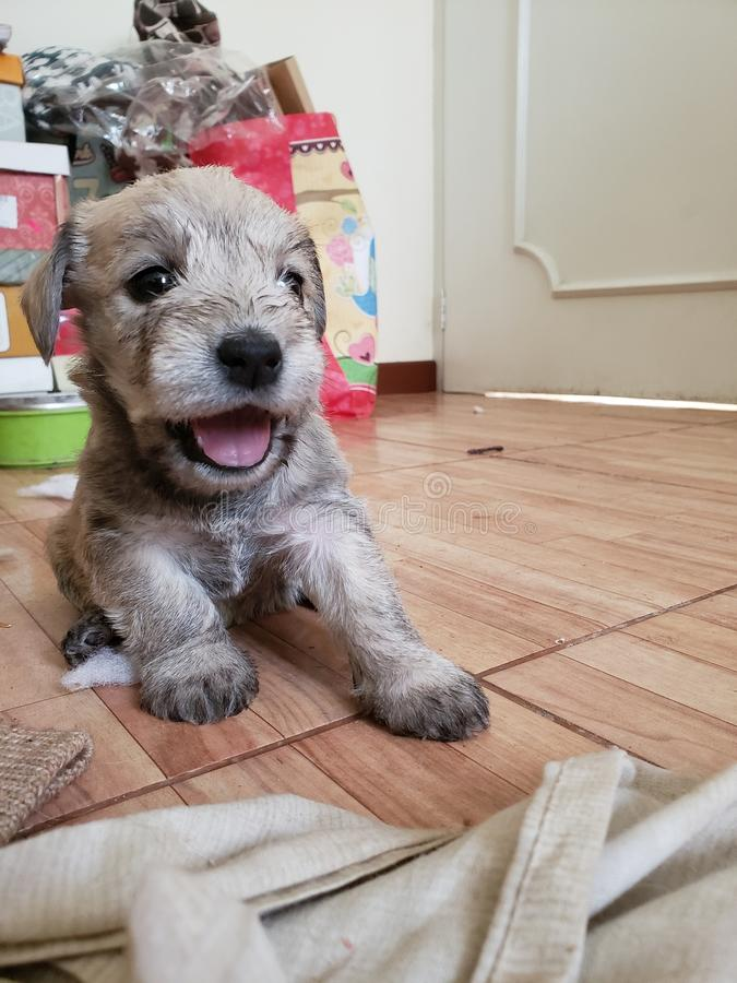 Puppy mouth stock images