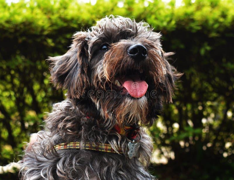 Cachorro foto de stock