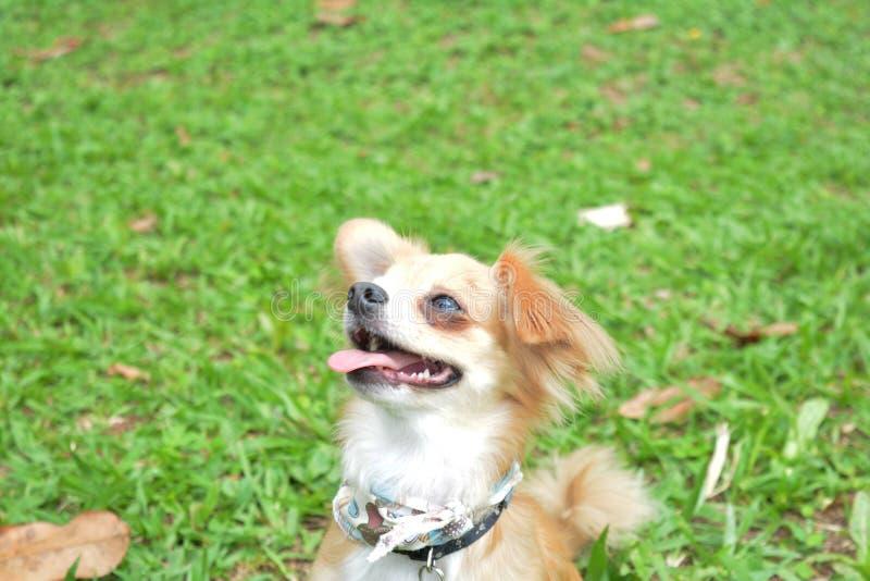Cachorro fotografia de stock royalty free