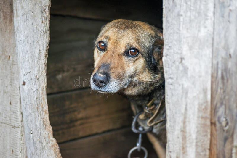 Cachorro abandonado sem teto com olhos muito tristes e inteligentes O cachorro sem-teto olha com olhos tristes enormes com a espe imagens de stock