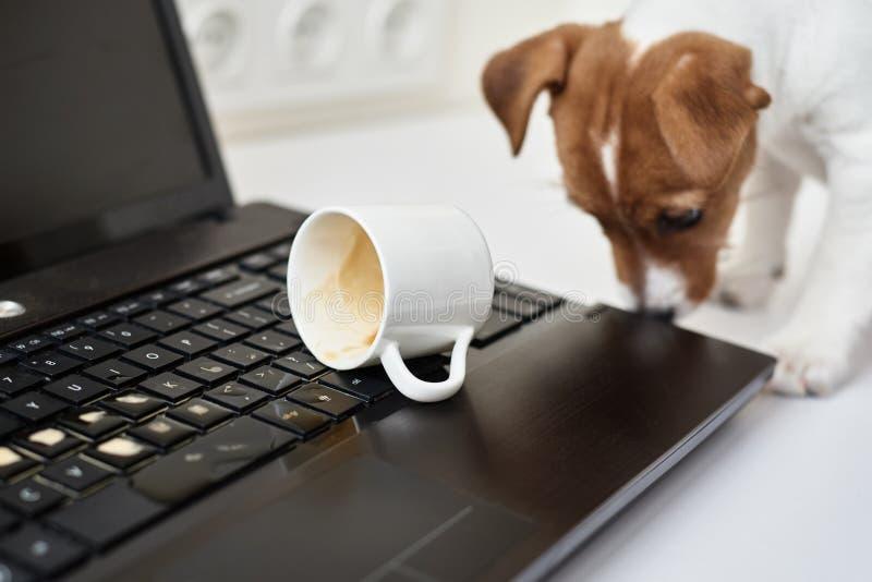 Cachorro derramado no teclado do notebook Propriedade de danos do animal de estimação imagens de stock