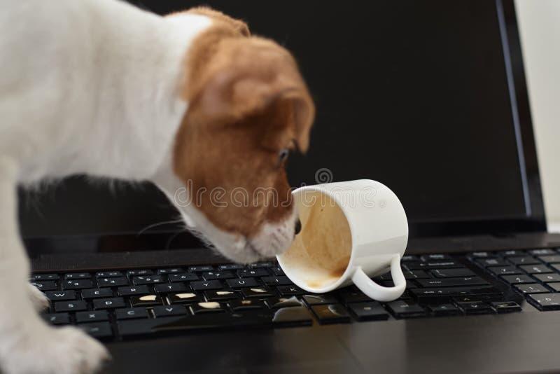 Cachorro derramado no teclado do notebook Propriedade de danos do animal de estimação fotos de stock
