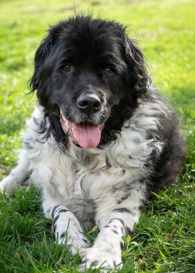 Cachorro Mais Velho Lá Fora imagens de stock