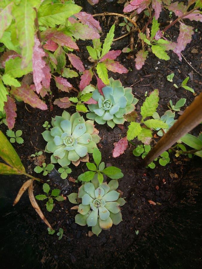 Cactaceae стоковые изображения