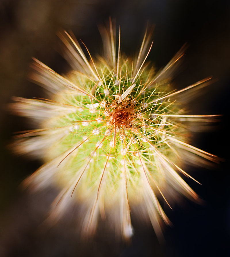 Free Cacti Beauty Stock Image - 1913701