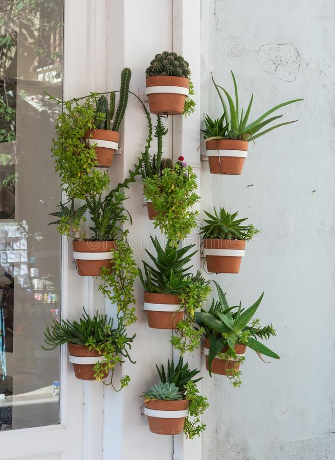 Cacti and other plants in the wall planters on outside wall. royalty free stock photo