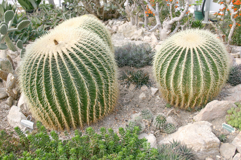 Download Cacto imagem de stock. Imagem de tropical, areia, planta - 61551