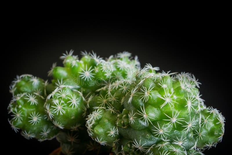 Download Cacto foto de stock. Imagem de deserto, verde, flor, verão - 80102198