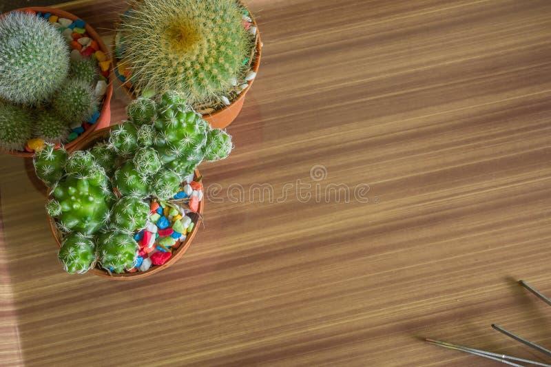 Download Cacto imagem de stock. Imagem de madeira, jardim, decoração - 80102331