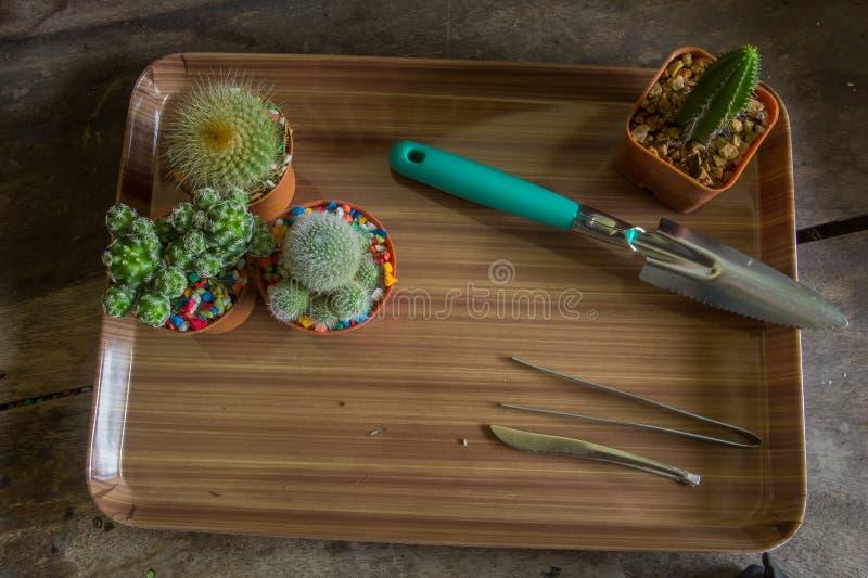 Download Cacto foto de stock. Imagem de decoração, bonito, flor - 80102340