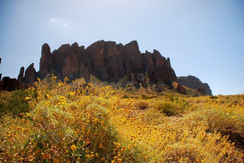 Cacto de Arizona foto de archivo