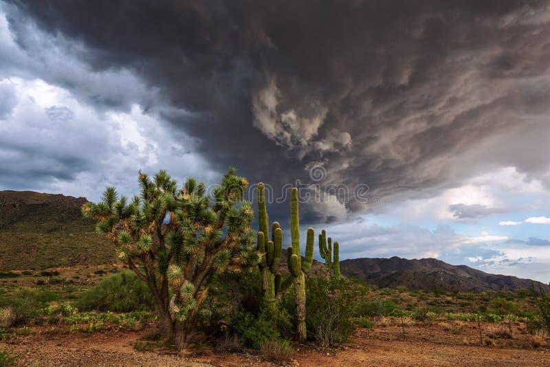 Cacto de Joshua Tree e do Saguaro com as nuvens de tempestade dramáticas no fundo fotos de stock