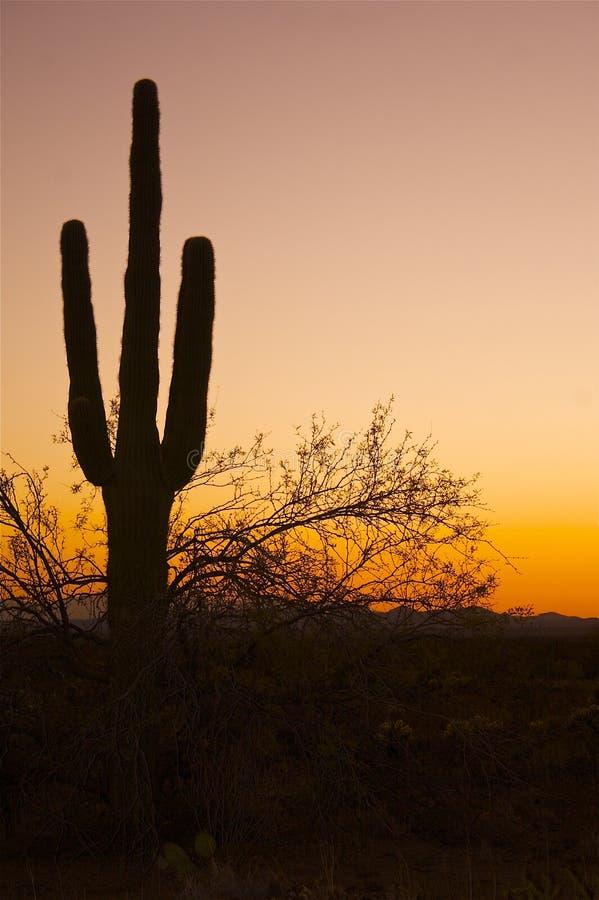 Cacto del Saguaro en puesta del sol imágenes de archivo libres de regalías