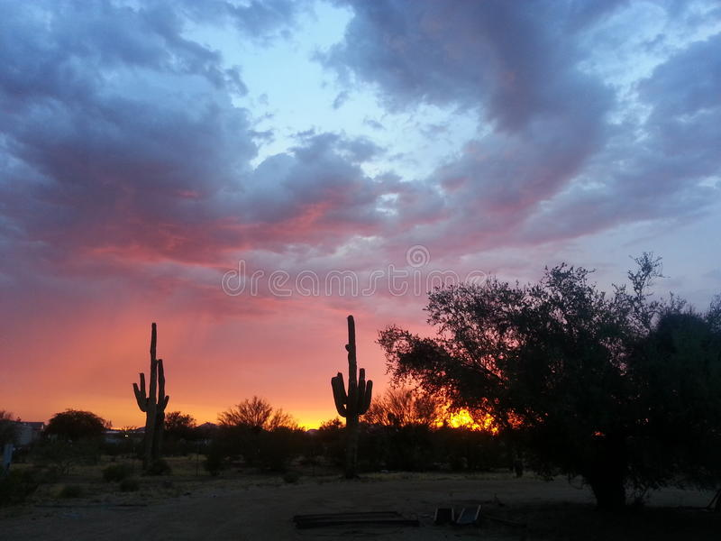 Cacto do sudoeste do Arizona & por do sol da monção imagem de stock
