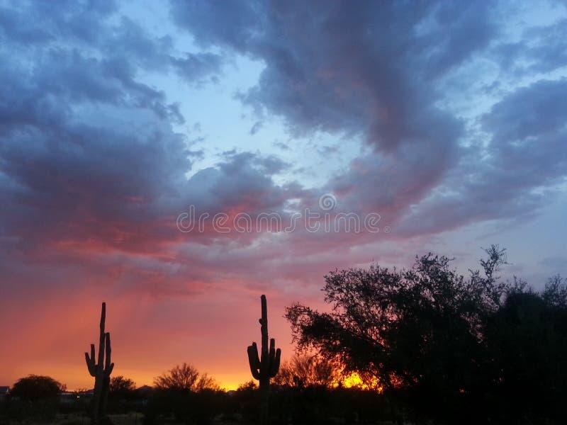 Cacto do sudoeste do Arizona & por do sol da monção foto de stock royalty free