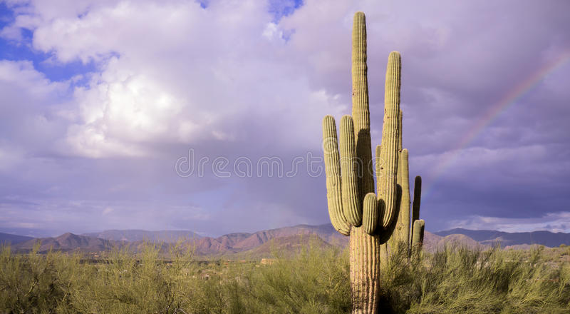 Cacto e arco-íris do saguaro da paisagem do deserto foto de stock royalty free