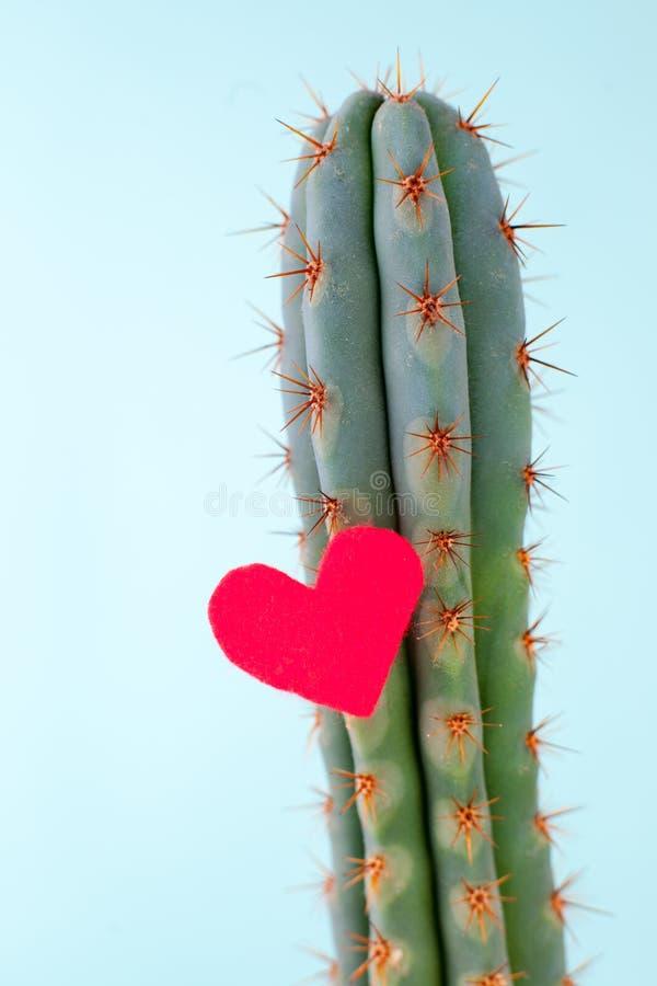 Cacto e coração vermelho nele, o conceito de sentimentos contraditórios, amor cruel, coração inabordável Minimalismo, o final foto de stock