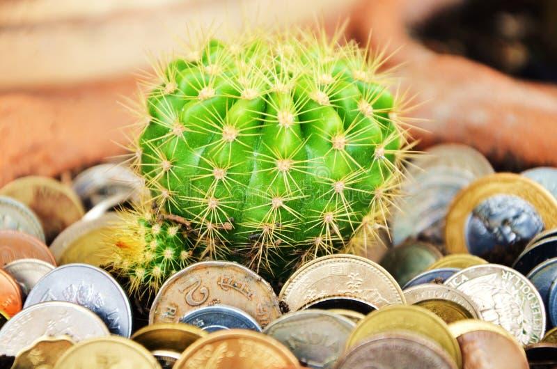Cacto e moedas verdes no solo imagens de stock royalty free