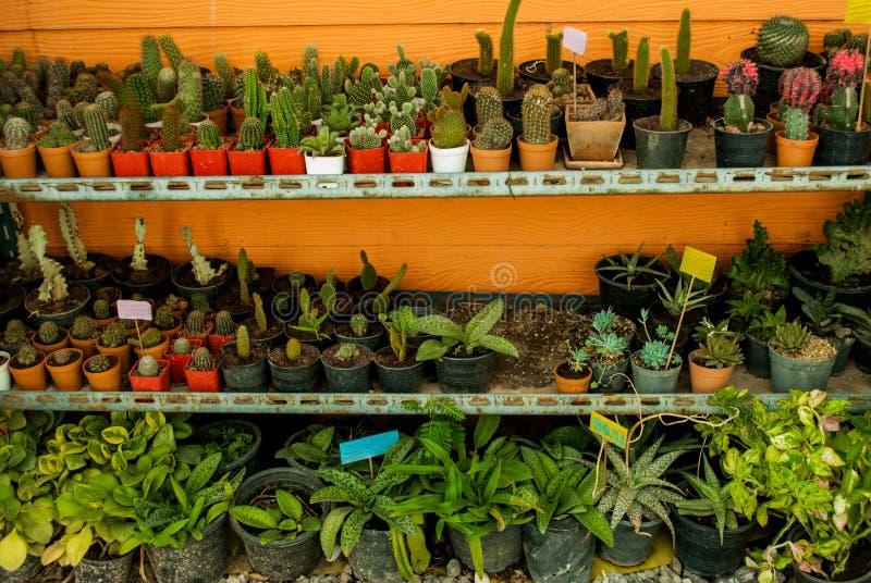 Cacto e muitas variedades de plantas em uns potenciômetros fotos de stock