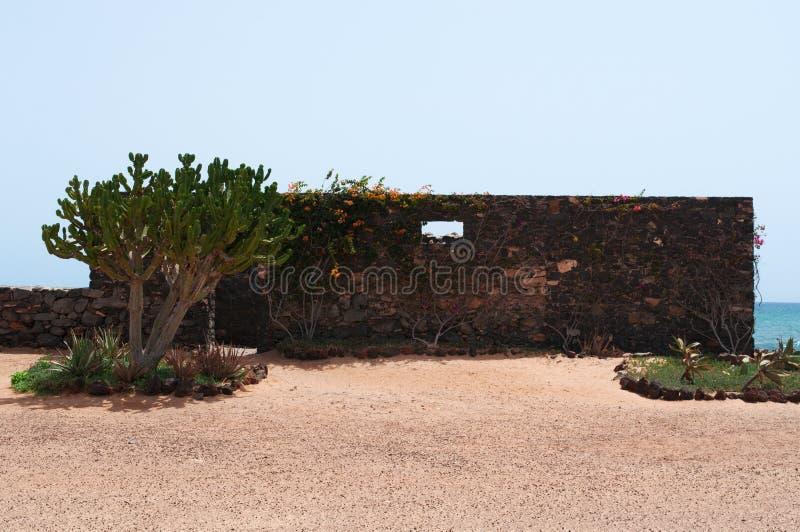 Cacto e paredes de pedra em uma paisagem marinha imagens de stock royalty free