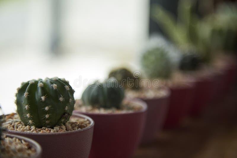 cacto e planta carnuda internos na beira da janela fotos de stock royalty free