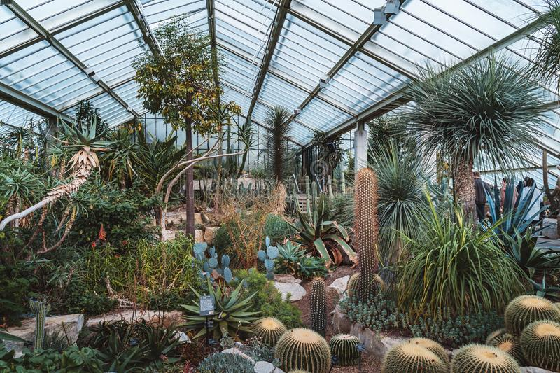 Cacto e plantas de dez zonas de clima diferentes na princesa do conservatório de Gales em jardins de Kew imagem de stock royalty free