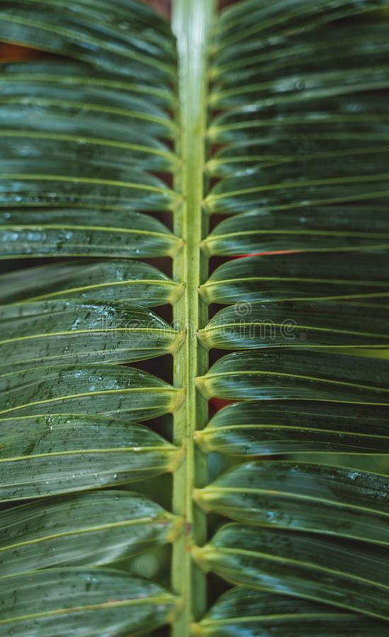Cacto e plantas de dez zonas de clima diferentes imagens de stock