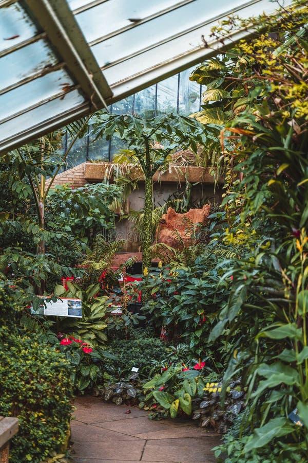 Cacto e plantas de dez zonas de clima diferentes na princesa do conservatório de Gales em jardins de Kew, UNESCO, Londres imagem de stock royalty free