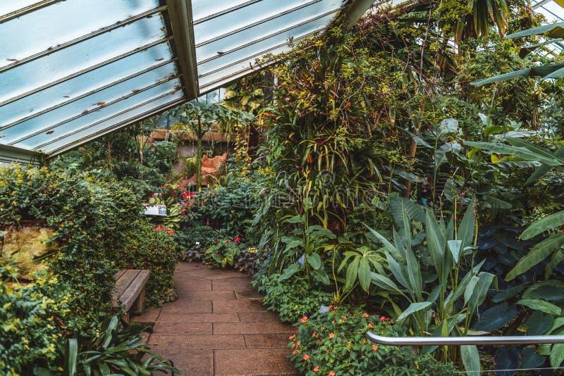 Cacto e plantas de dez zonas de clima diferentes na princesa do conservatório de Gales em jardins de Kew, UNESCO, Londres fotografia de stock