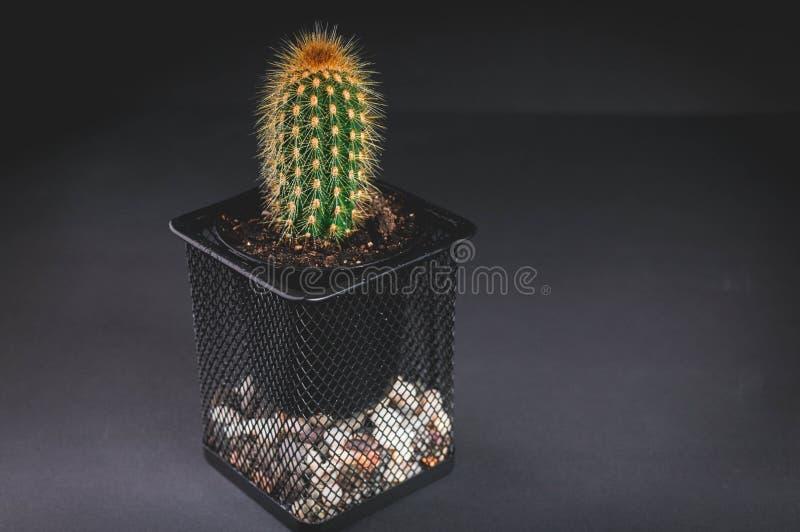 Cacto em um potenciômetro decorativo em um fundo escuro Baixa iluminação chave Tiro horizontal foto de stock
