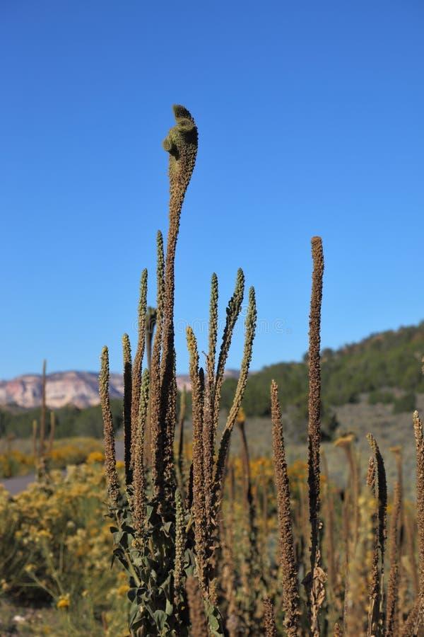 Cacto Exótico En Desierto Foto de archivo libre de regalías